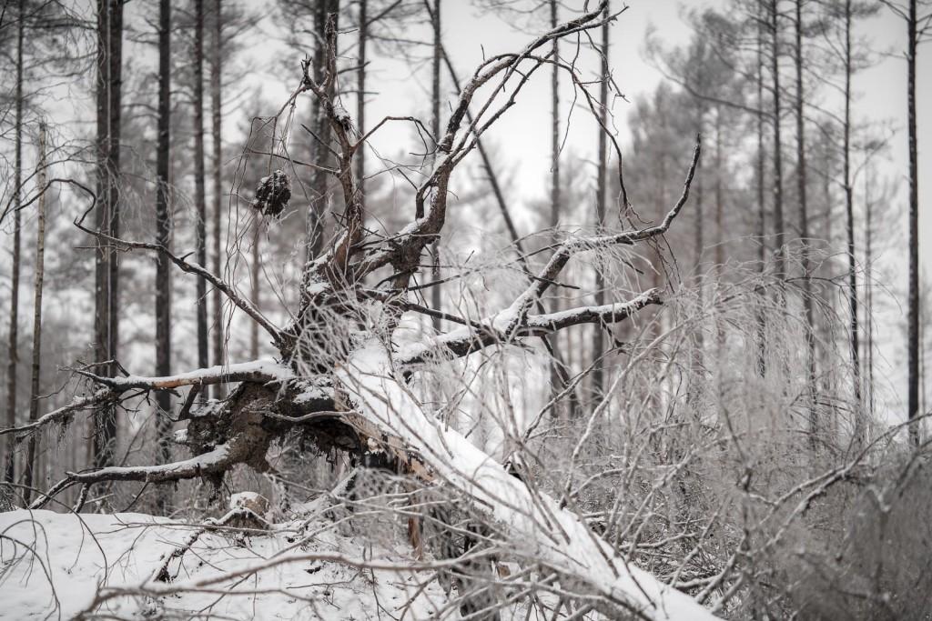 Hallaskogsbrannan-1236