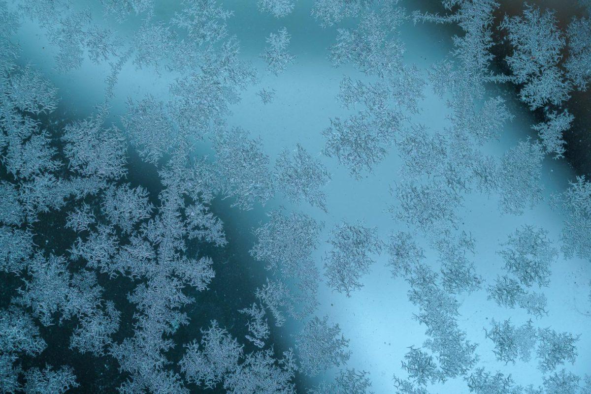Frostblommor i väntan på våren