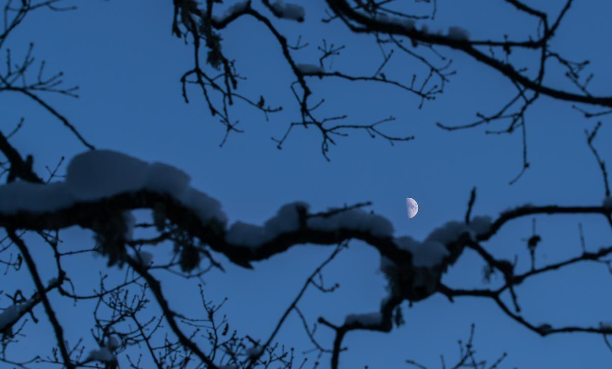 Måne i skymning