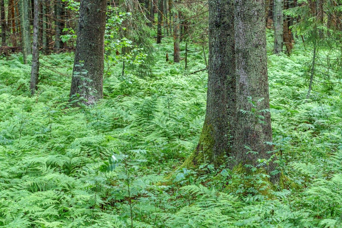 Träd i Pansarudden, utan polarisationsfilter