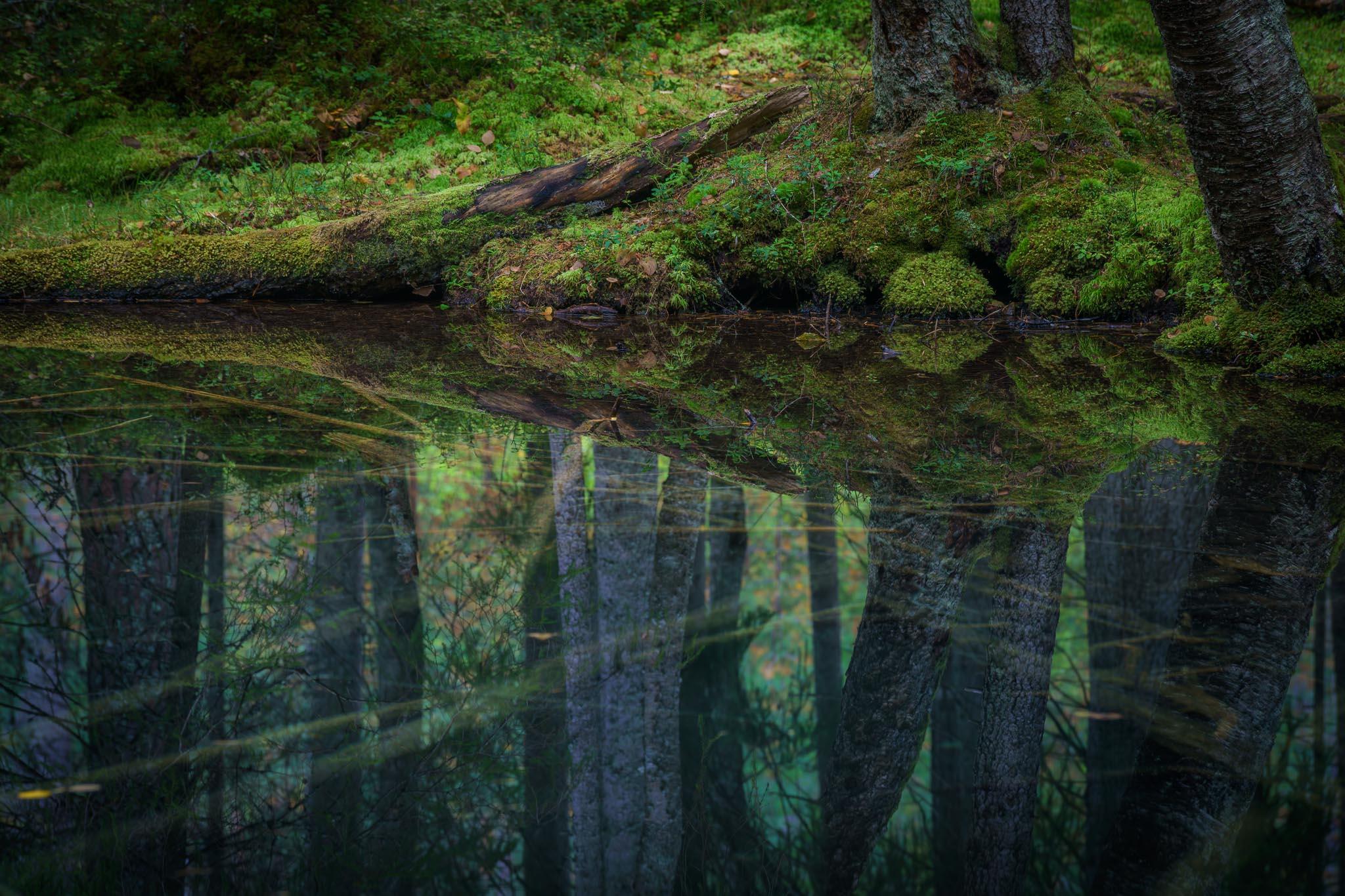I trollskogen vid Ingbo källor