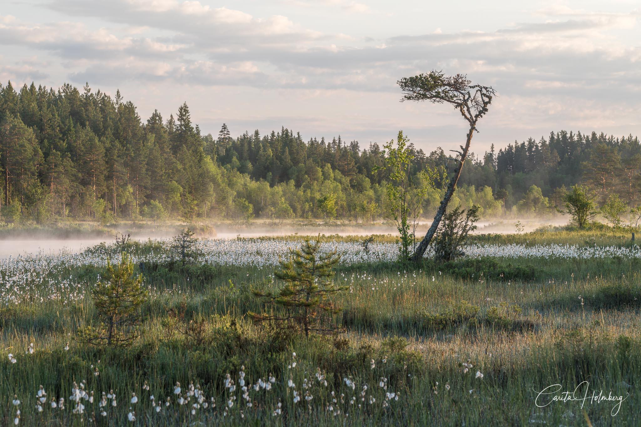Sommarnatt i Finnmarken