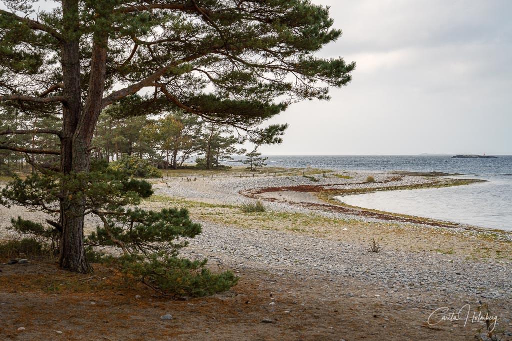 En strand vid Torö