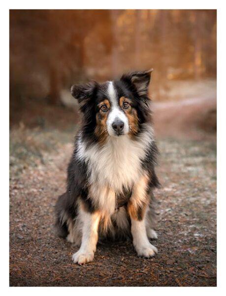 Hundporträtt