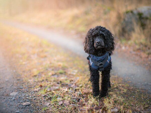 Hund på skogsväg