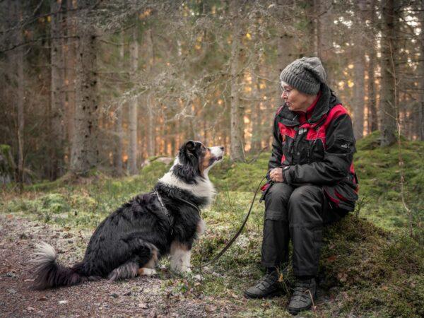 Samspel hund människa